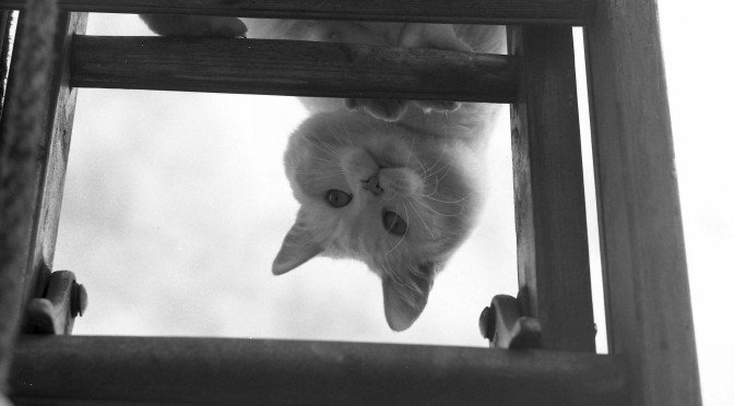 Curiosity Killed the Cat…