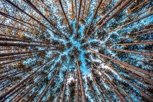 treesfrombelow